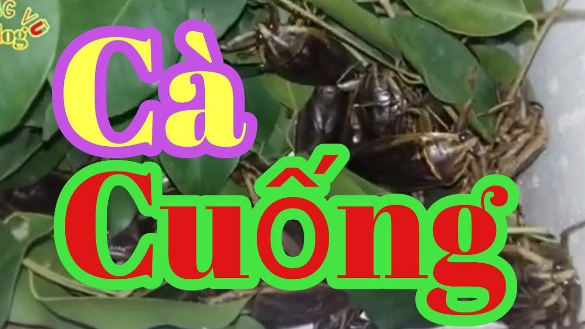 how to raise ca cuong seeds /cách nuôi Cà Cuống /hoang vu vlog